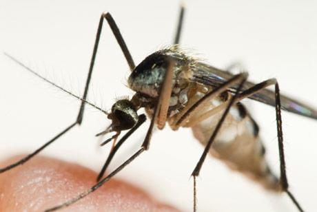 Health Directorate urges caution when travelling to countries with chikungunya virus outbreak