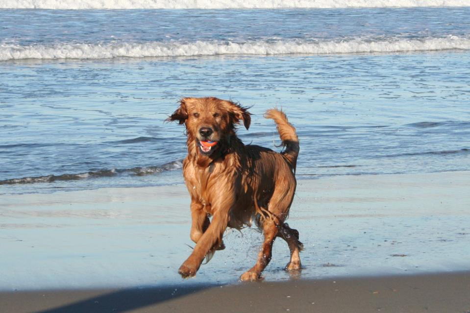 Dog Friendly Beach Restaurants San Diego